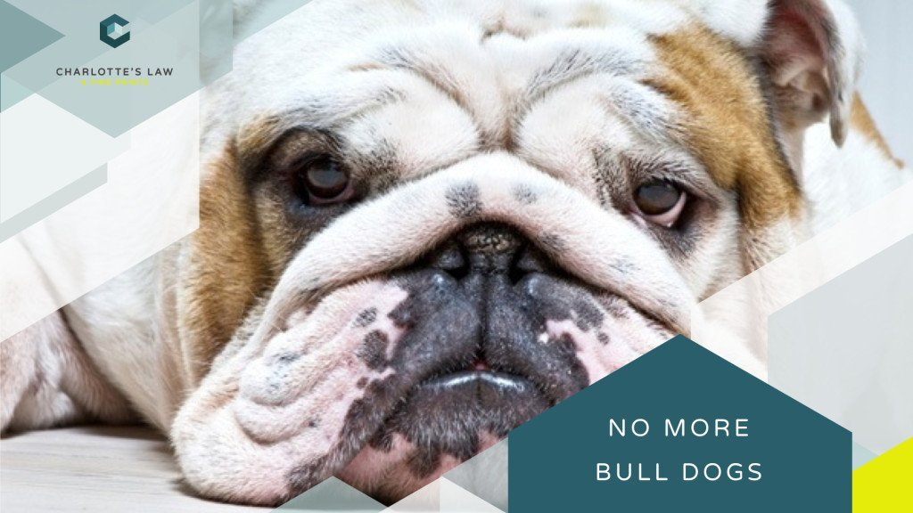 We don't need Bull Dog Lawyers